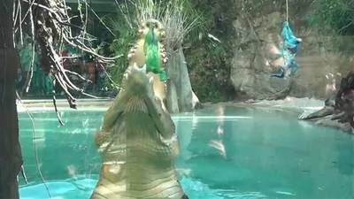 News video: Crocodile Picks Super Bowl XLIX Winner